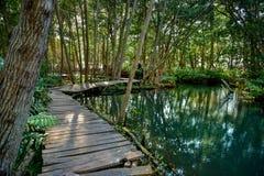 Namorzynowy las Ria Celestun jeziorem fotografia stock