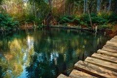 Namorzynowy las Ria Celestun jeziorem zdjęcie royalty free