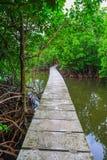 Namorzynowy lasowy resot w koh kong prowinci w królestwie Cambodia blisko Thailand granicy Fotografia Stock