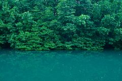 Namorzynowych drzewa Forest Green liści odbicia Parkowy Rzeczny tło obraz stock
