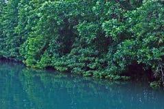 Namorzynowych drzewa Forest Green liści odbicia Parkowy Rzeczny tło zdjęcie royalty free