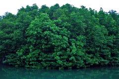 Namorzynowych drzewa Forest Green liści odbicia Parkowy Rzeczny tło fotografia royalty free