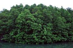 Namorzynowych drzewa Forest Green liści odbicia Parkowy Rzeczny tło fotografia stock
