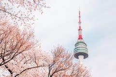 Namsan Seoul torn med den körsbärsröda blomningen i Korea arkivbild