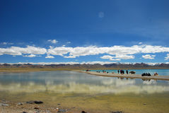 By the namtso lake Stock Image