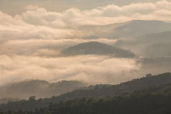Nan Province of Thailand. Samer Dow from National Park sri nan from nan province,Thailand Stock Image