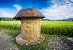 Nan Rice Terraces Nan Province, Thailand Royaltyfri Foto