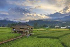 Nan Rice Terraces Nan Province, Thailand Arkivbilder