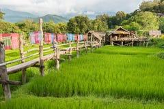 Nan, Thaïlande - septembre, 24, 2017 : Café dans la rizière Photo libre de droits