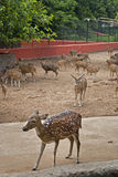 Nandankanan Zoological Park Royalty Free Stock Images