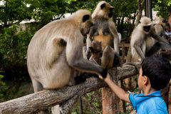 Nandankanan Zoological Park Stock Images