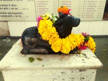 Nandi η ιερή αγελάδα Shiva στοκ εικόνες