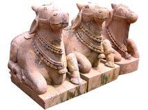 Nandi Stock Image