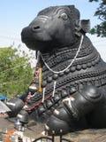Nandi gigante Fotos de Stock Royalty Free