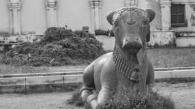 Nandi Statue dentro il palazzo di Maratha a Thanjavur immagini stock libere da diritti