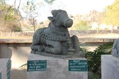 Nandi Stone lies in the open-air museum in Hampi, India. Stone s. Culpture. Sacred cow stone sculpture stock photo