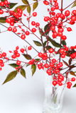Nandina domestica Stock Images