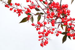 Nandina domestica Royalty Free Stock Photography