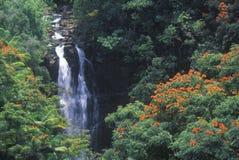Nanee Falls Royalty Free Stock Photos