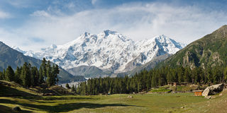 Nanga Parbat i Czarodziejska łąki panorama, himalaje, Pakistan Obraz Stock