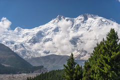 Free Nanga Parbat Mountain And Pine Tree Stock Images - 77382194