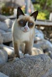 Nangyuan-Insel-Katze Stockfotos