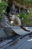 Nangyuan-Insel-Katze Lizenzfreies Stockbild
