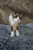Nangyuan-Insel-Katze Lizenzfreie Stockbilder