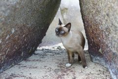 Nangyuan-Insel-Katze Stockbild