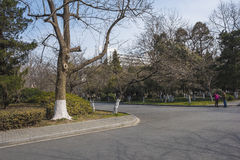 Nanjing Forestry University campus. Nanjing Forestry University is a combination of forestry, forestry, agriculture, animal husbandry, fishing and other Stock Photos