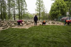 The garden workers planted grass on the qinhuai river. In nanjing, jiangsu province, in the spring, to better beautify nanjing and protect the river Banks, the stock images