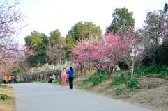 Nanjing Meihua Mountain Royalty Free Stock Photo