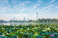 Nanjing-Skyline und -lotos Stockfoto