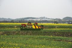 Nanjing yaxi international slow city canola pastoral scenery agricultural royalty free stock photography