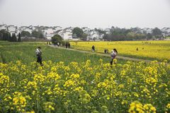 Nanjing yaxi international slow city canola pastoral scenery agricultural stock photos