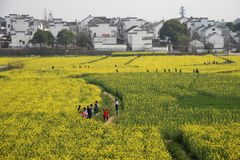 Nanjing yaxi international slow city canola pastoral scenery agricultural stock photography