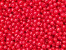 Nanking Cherry Fruits Background Royalty Free Stock Images
