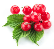 Nanking or felted cherry ftuits with leaves isolated on a white. Royalty Free Stock Image