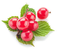 Nanking or felted cherry ftuits. Royalty Free Stock Photos