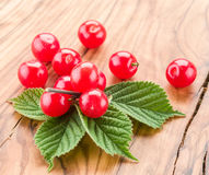 Nanking or felted cherry ftuits with leaves. Stock Photos