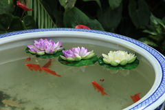 Nanluoguxiang tank with fish Royalty Free Stock Images