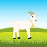 Nanny goat on field Royalty Free Stock Image