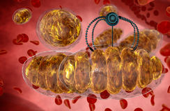 Nanorobot and mitochondrion. Medical concept anatomical future. Human anatomy, inside organism view Stock Photos
