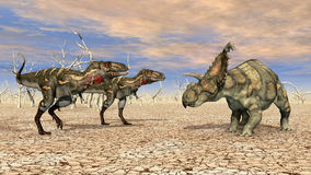 Nanotyrannus and Albertaceratops Royalty Free Stock Images