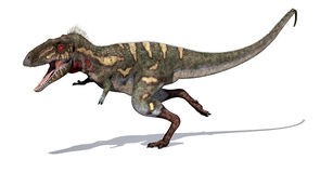 Nanotyrannus Dinosaur on the Run Stock Photography