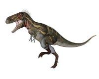 Nanotyrannus dinosaur walking - 3D render Royalty Free Stock Photos