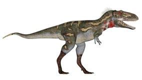 Nanotyrannus dinosaur walking - 3D render Royalty Free Stock Photo