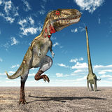 Nanotyrannus and Mamenchisaurus Stock Photography