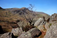 Nant Ffrancon tree Stock Images