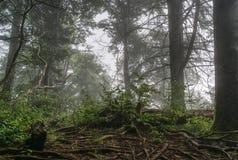 Nantahala国家森林有雾的早晨 免版税库存照片